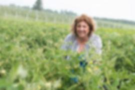 Huguette Plante Tomate