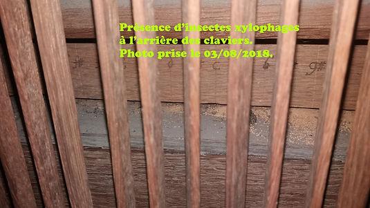Présence_d'insectes_xylophages.jpg