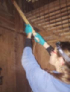 Traitement contre les insectes xylophage