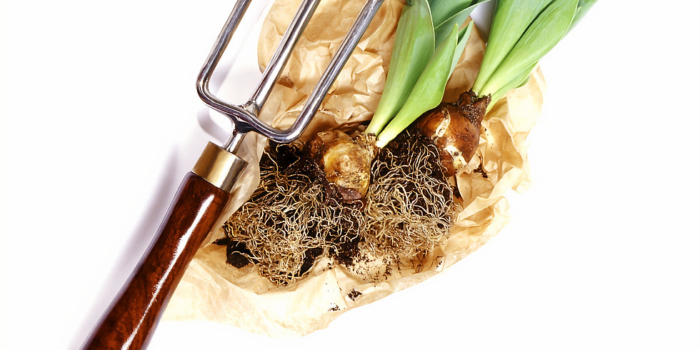 How to re-grow your vegetables