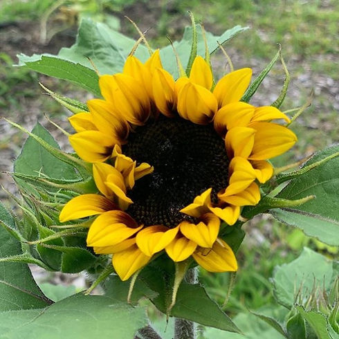 Here%20comes%20the%20sun...%20flowers!%2