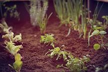 Kräuter und Gemüse selber anpflanzen