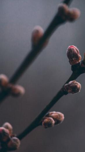 Spacer botaniczny w lutym. Jakie zioła zbierać + kilka słów czym jest gemmoterapia