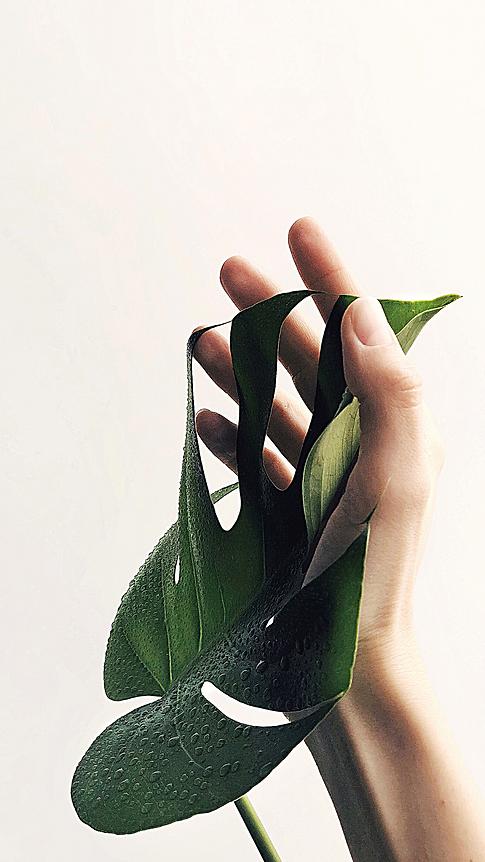 Poczuj zen z Herba Sfero