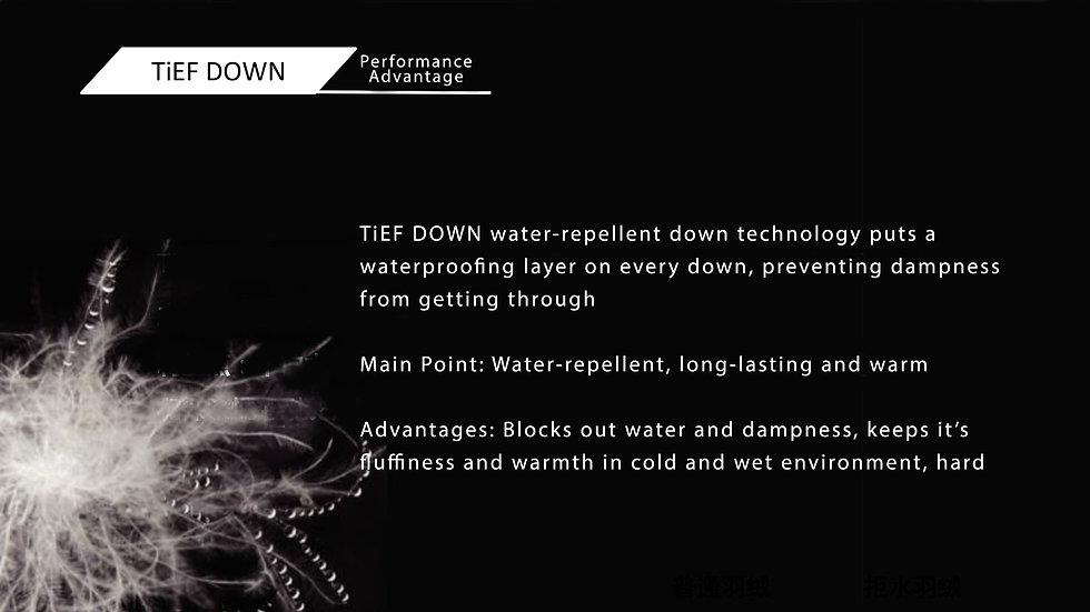 TiEF Down 5.jpg