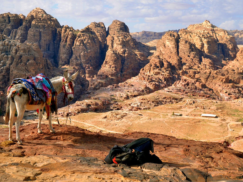 Donkey with rocks