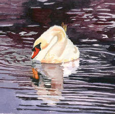 Swan on the Charles
