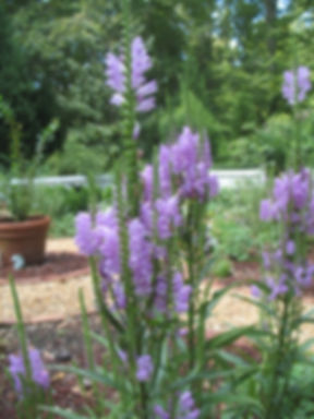 Garden 057.jpg