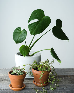 Green house plants in brown clay pots on