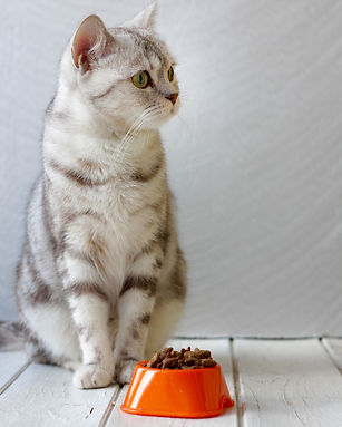 cropped cat 2.jpg