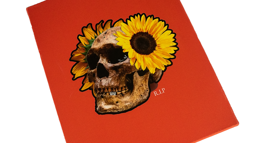 PUSHING DAISIES PRINT COLLECTION