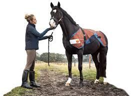 BEMER Equine Unit