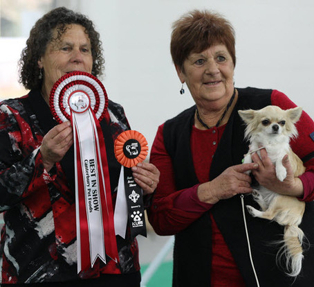 Best in Show for Nikita as Tara announces her arrival with a Baby Puppy in Show