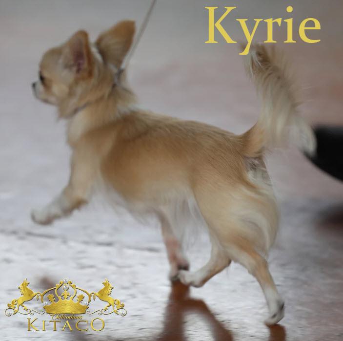 Kyrie6