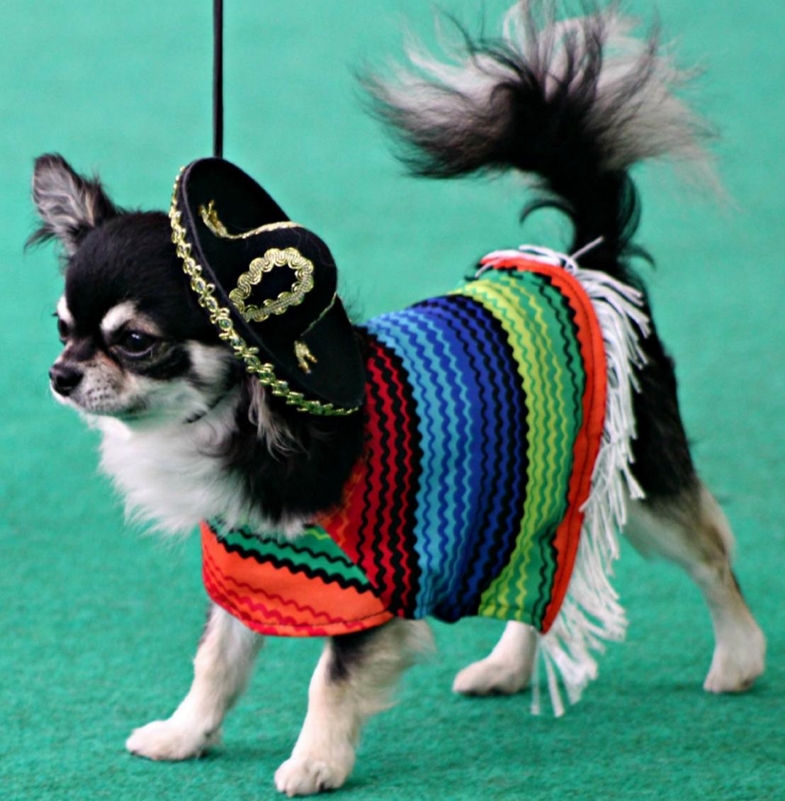 Mexico in his sombrero