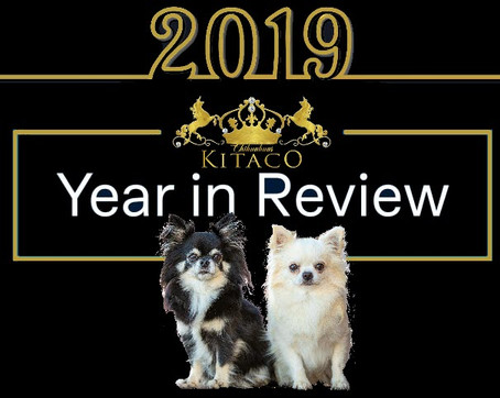 2019 - Kitaco's Year in Review