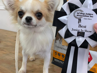 Best Junior in Show for Ava