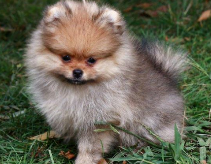 What to ask a breeder