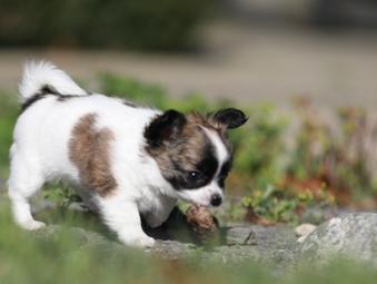 Kitaco & Petplan partnership protects pups for life*