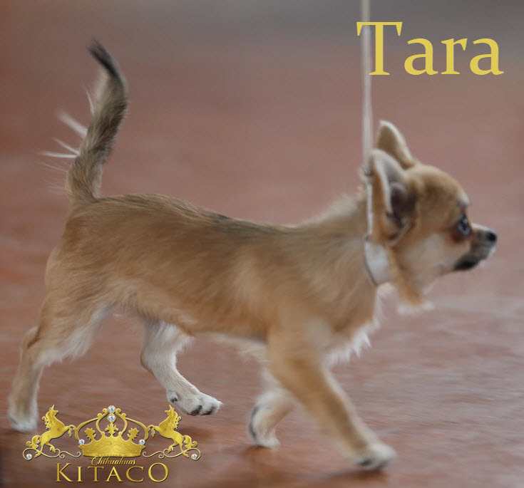 Tara4