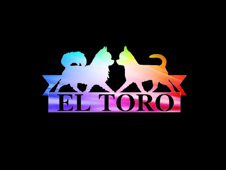 El-Toro - 2019 NZ Chihuahua Breeder of the Year