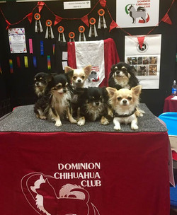 Pet Expo 2016 and 2017
