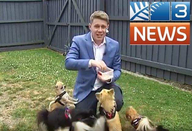 TV3 - NZ Chihuahua Rescue