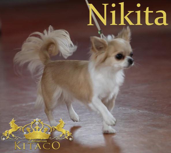 Niki19
