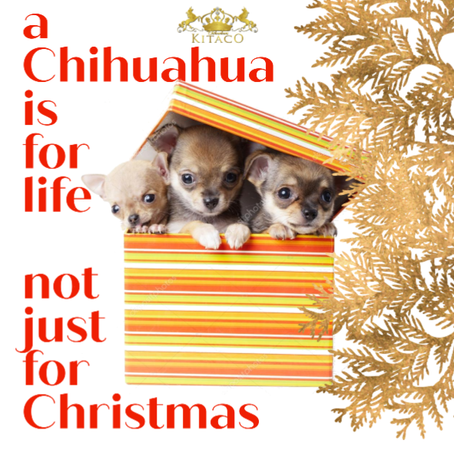 Why you should never give a puppy as a Christmas present