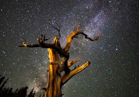 BobBristlecone.jpg