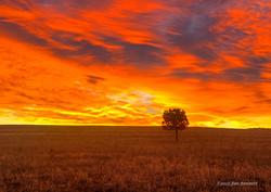 Lone Tree Autumn Sunrise_s