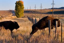 10-09-02 Jackson, Wyoming 0039