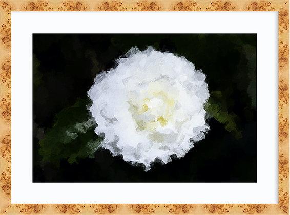 Camellia Framed
