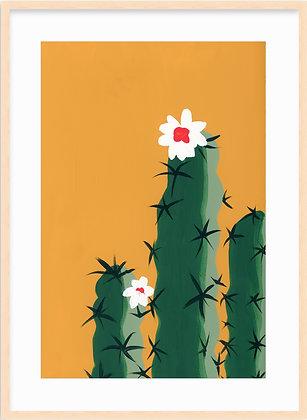 Saguaro Framed