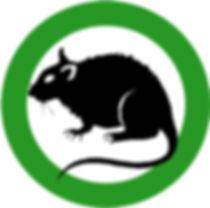 Rats, Rodent