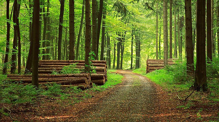 Forest Image 2.jpg