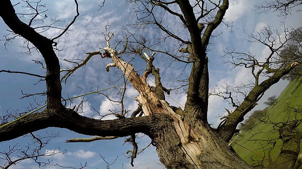 Re-trenchment tree pruning