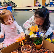 Learning how to plant flowers!