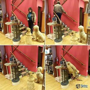 Dog training practice