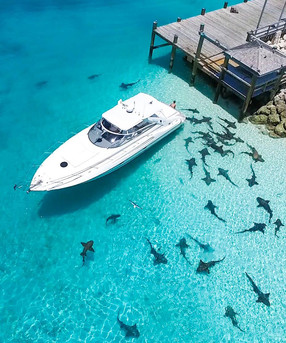42' Sunseeker - dock and sharks.jpeg