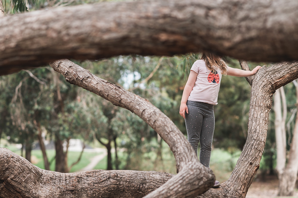 child standing on the branches of a tree with a bough in the foreground blocking her head. documentary family photography melbourne