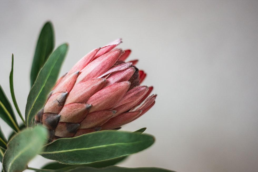 protea flower lifestyle personal branding