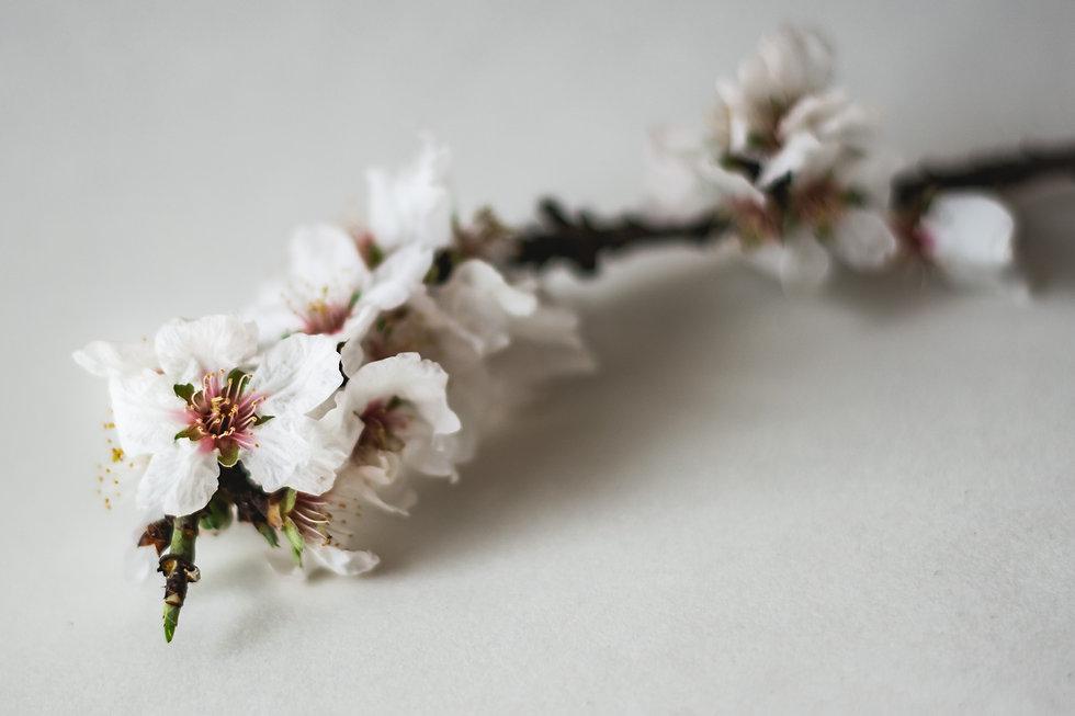 blossom branding image