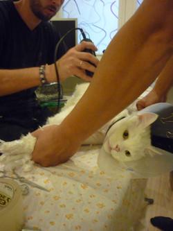стрижка кошек у Вас дома