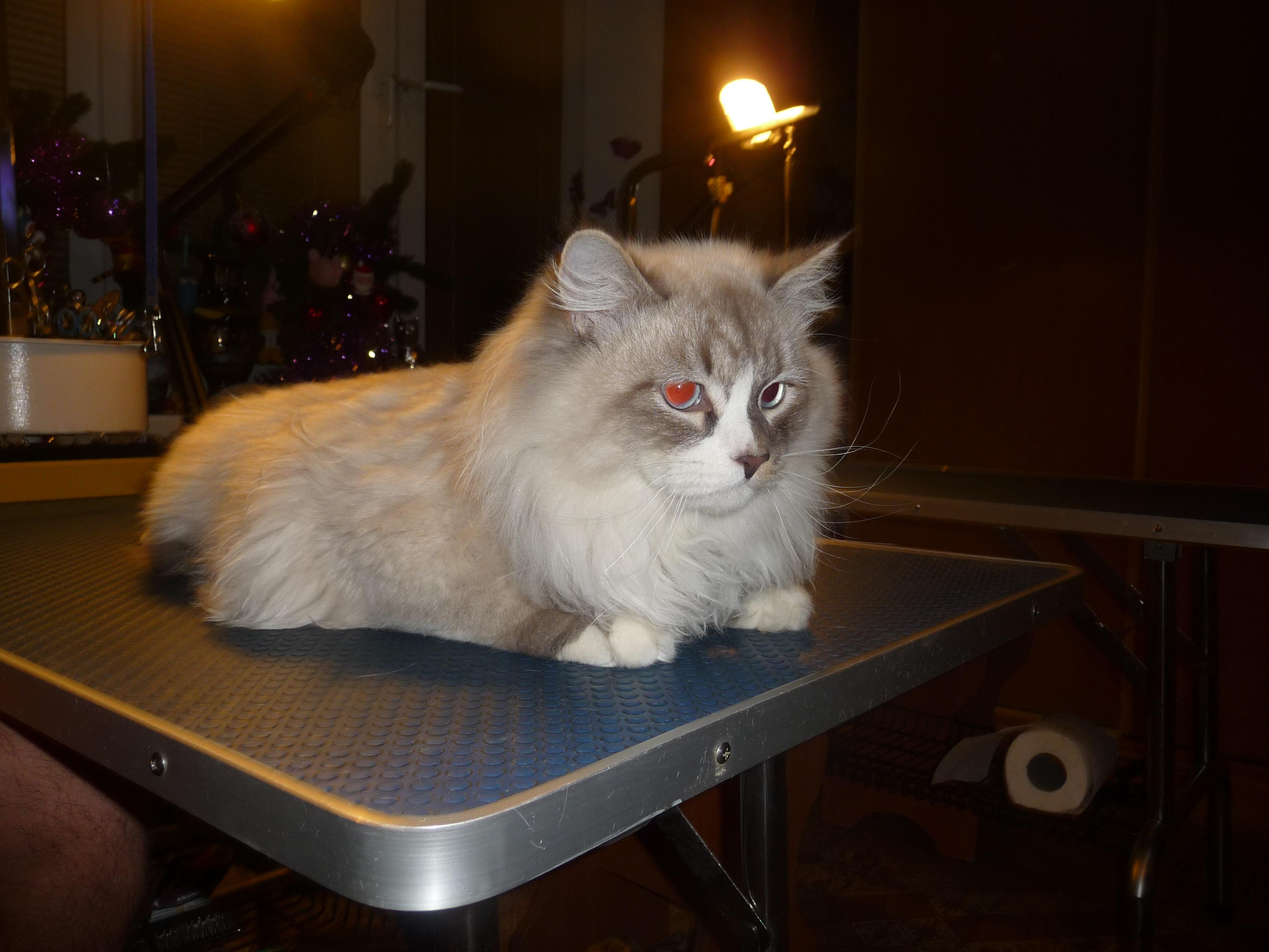 Подстричь кошку 8(499)409-31-17