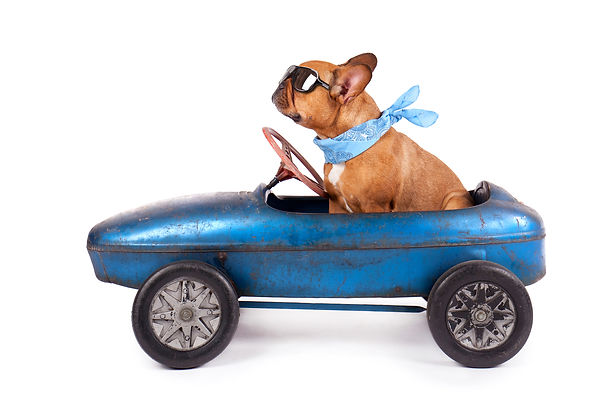 design element of a dog driving a car on the k9 express page
