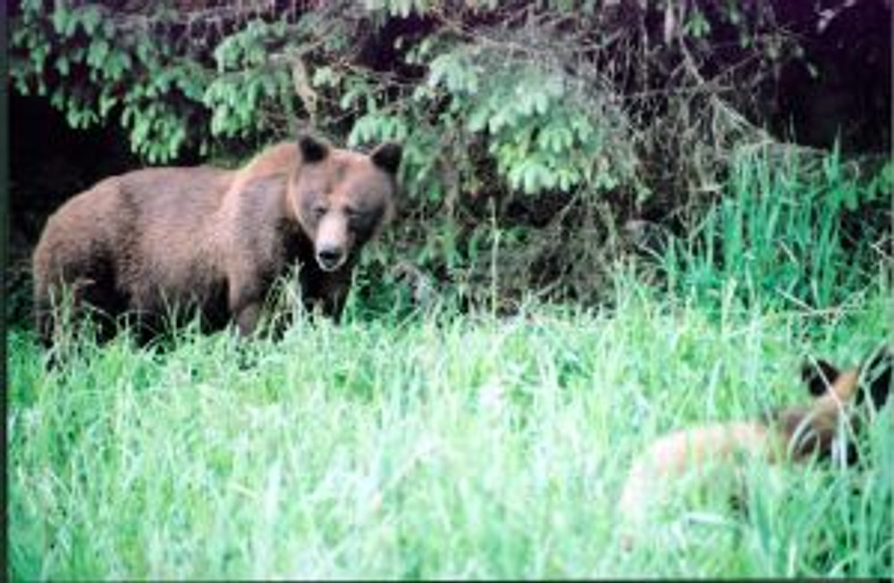 Lucy and her cub - the matriarchal female in the Khutzetmateen when I was there.