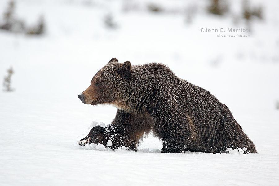 Photo provided by John Marriott (wildernessprints.com)
