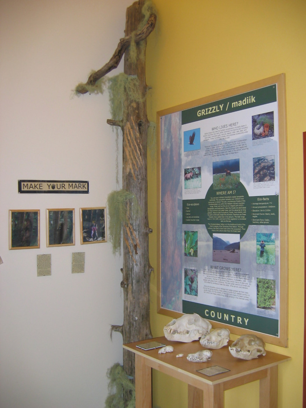 Part of the K'tzim-a-deen Sanctuary visitor centre included a replicate bear mark tree, which was super fun to make.