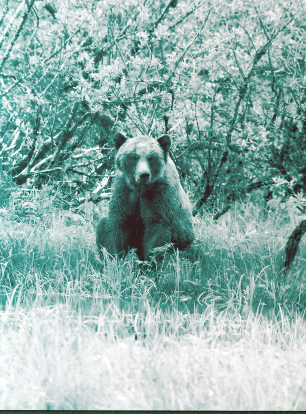 The first bear I cam eye to eye with. Isn't he gorgeous?Just saying hi.
